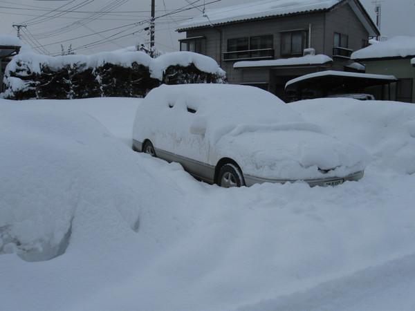 Yuki30cm